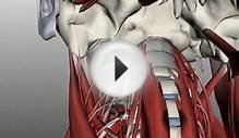 Neck Muscles Anatomy – Continuing Medical Education